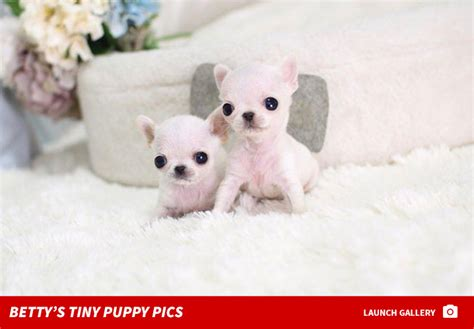 betty s teacup puppies s teacup broker accused of puppy scam tmz