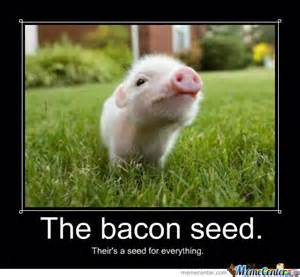Funny Bacon Meme - bacon seed by jammerthehammer meme center