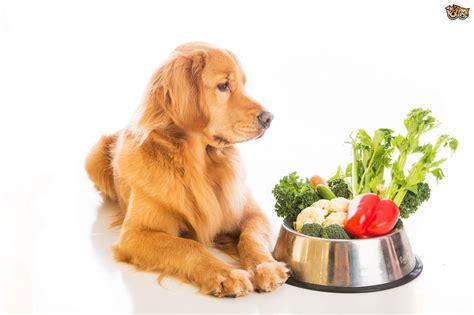 vegan dogs the vegan vegetarian pets4homes