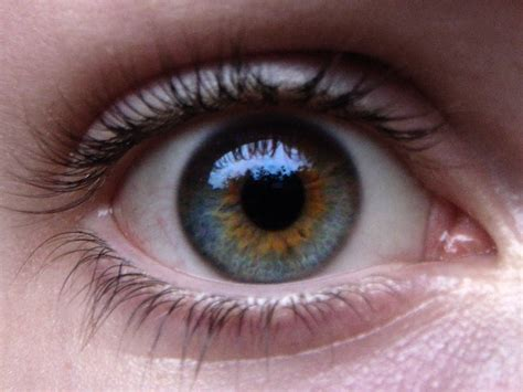 blue green eye color clevergirlhelps