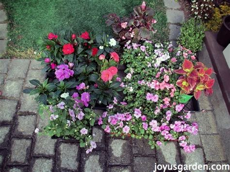How To Plant A Flower Bed by How To Prepare And Plant A Flower Bed