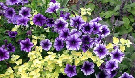 specie fiori elenco specie fiori e foglie