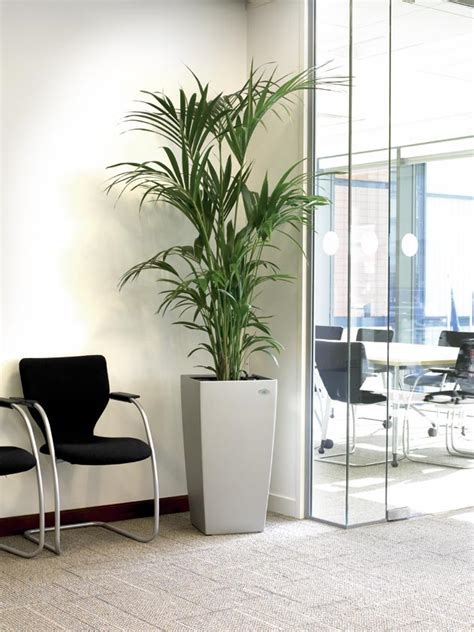 plants for office bring the outdoors in whitespace consultants