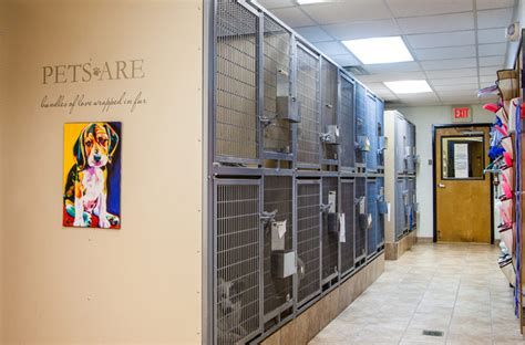 east lincoln animal hospital denver nc cat cages for boarding facilities cat boarding canine