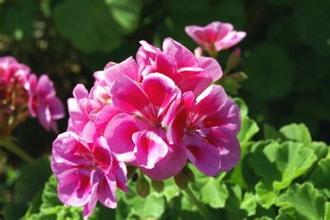 Duftende Garten Pflanzen by 11 Duftende Pflanzen Die L 228 Stige M 252 Cken Wirksam