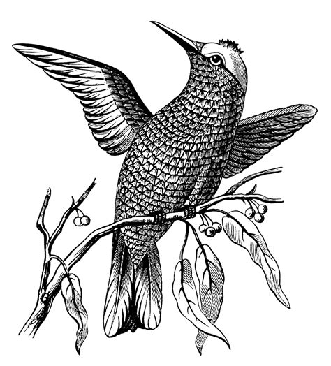 bevalet s hummingbirds and flowers a vintage grayscale coloring book vintage grayscale coloring books volume 3 books bird on branch with leaves and berries design shop