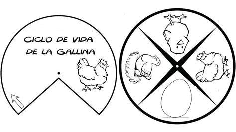 ciclo de vida del pollo para colorear e imprimir apexwallpaperscom que son los ciclos de vida en los seres vivos en imajenes