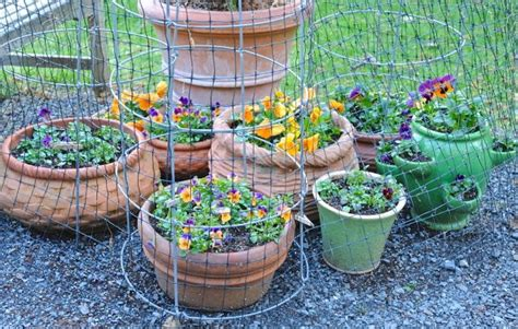 Ordinary Bird Netting For Gardens #4: Pansy-pots-inside-skunk-proof-cages.jpg