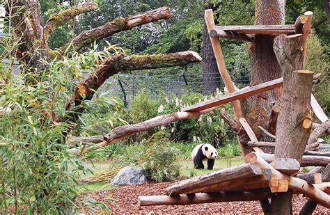 panda garden rock panda garden dan pearlman designed exhibit opens berlin