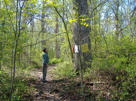 the wood for the trees one s view of nature books big tree searchers visit stadium woods save