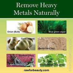 Menstruation During Heavy Metal Detox by 1000 Images About Heavy Metal Detox On Heavy