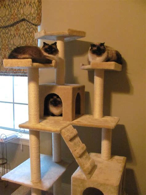 cat tree house cat accessories cat tree cat and cat hacks