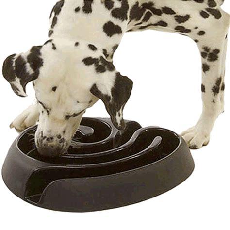 maze bowl buster maze feeder bowl an interactive bowl for feeding grey