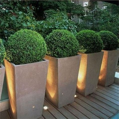 globe boxwoods in planters for backyard juxtapost
