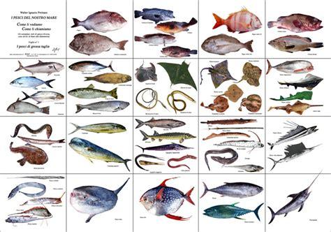 alimentazione tasso il tasso di estinzione delle specie sulla terra 232 in