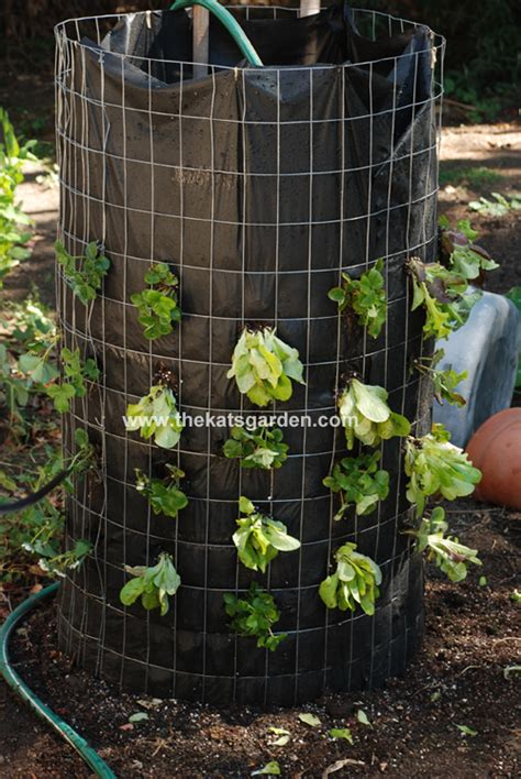 Vertical Garden Lettuce by How To Make A Vertical Lettuce Garden