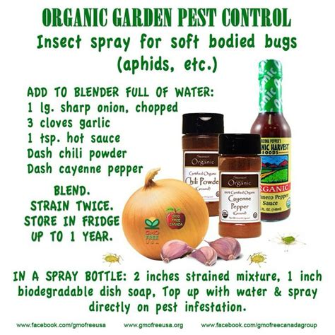 natural insect repellent the garden pinterest
