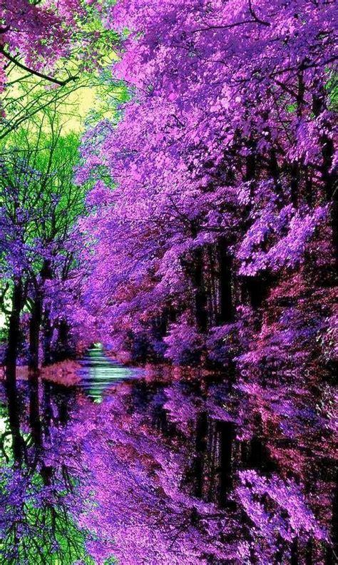 flower garden japan best 25 purple trees ideas on jacaranda trees