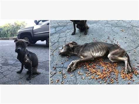 abandoned dogs starved abandoned dogs found in delco police haverford