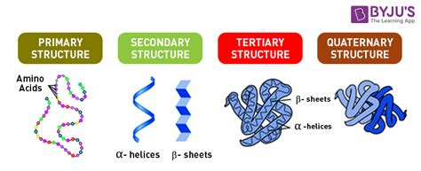 protein structure proteins an overview of its structure functions and