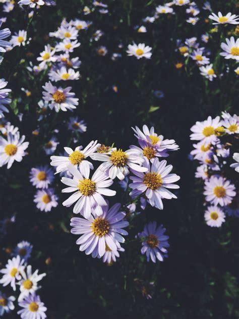 imagenes tumblr margaritas linda natureza tumblr