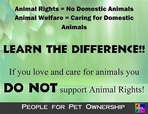 Do Animals Rights Essay by Do Animals Deserve Rights Essay Top 8 Arguments Against Animal Rights