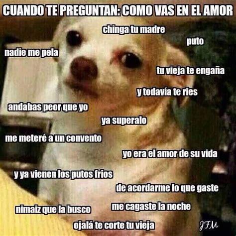Memes De Chihuahua - 237 best images about to laugh on pinterest tes favors