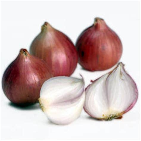 Obat Herbal Putih Untuk Diabetes tanaman obat untuk mengobati bisul tanaman obat