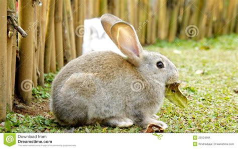 Rabbits In Garden by Rabbit In A Garden Stock Image Image 25504661