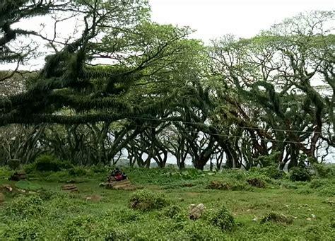film petualangan di hutan amazon hutan di banyuwangi yang seperti di film lord of the rings