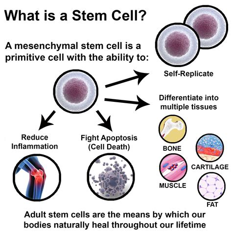 stem cells stem cell procedures spine pain institute of new england