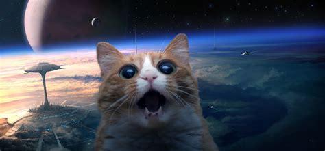 wallpaper tumblr cat space cat wallpaper wallpapersafari