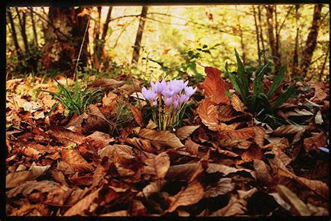 fiore autunnale fiori e piante