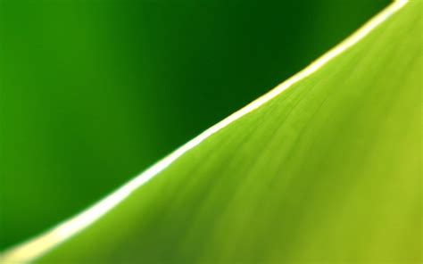banana leaf wallpapers hd pixelstalknet
