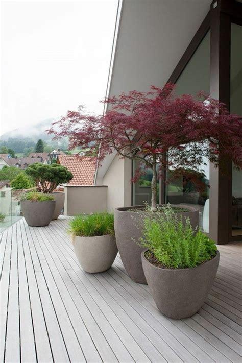 baum wie haus pflanzen terrassen und gartengestaltung durch pflanzen aufpeppen