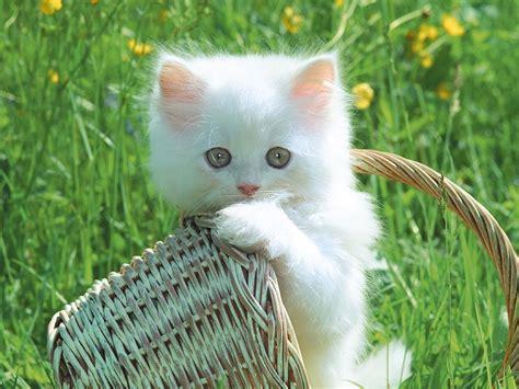 imagenes increibles de gatos imagenes de gatos persas taringa