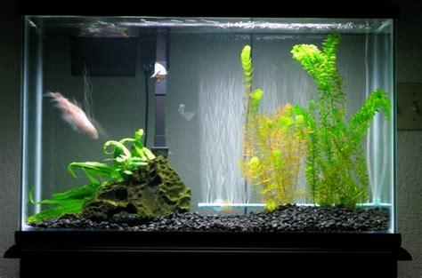 desain aquarium air tawar minimalis manfaat filter air ro untuk ikan hias air tawar filter