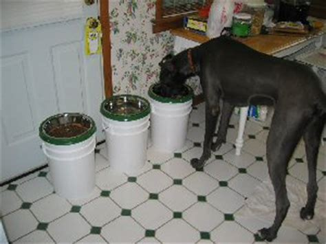 Great Dane Elevated Feeder great dane rescue in ohio harlequin great dane