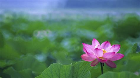 buddha and lotus lotus flower buddha wallpaper