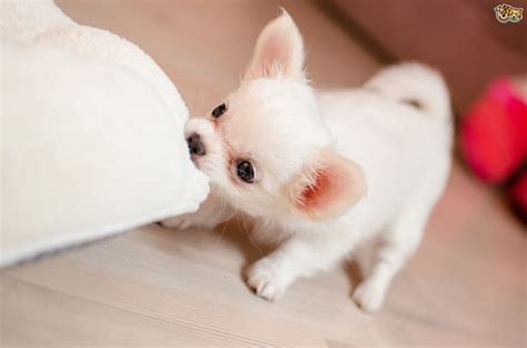 of puppies 10 important things to do when you get your new puppy pets4homes