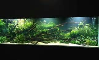 3400 litre aquascape fish freshwater and aquarium