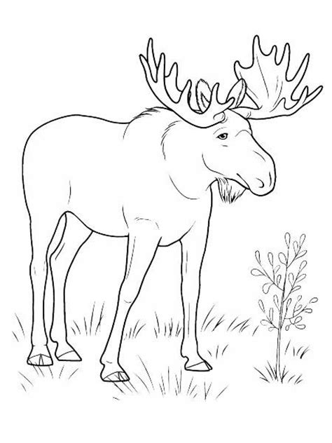 herbivorous animals coloring page herbivore animals coloring pages deer for totally sketch