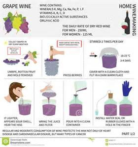 how to make wine at home home wine wine from grapes infographics stock