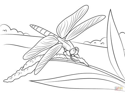 dragonfly coloring page dragonfly sits on stem coloring page free printable