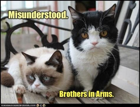 Tardar Sauce Meme - 249 best images about grumpy cat on pinterest gift