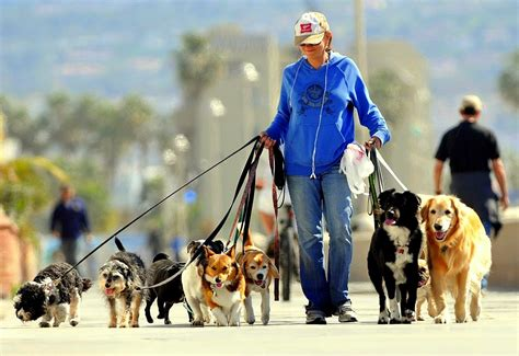 dog sitter jobs every time you walk your dog shelter gets a donation