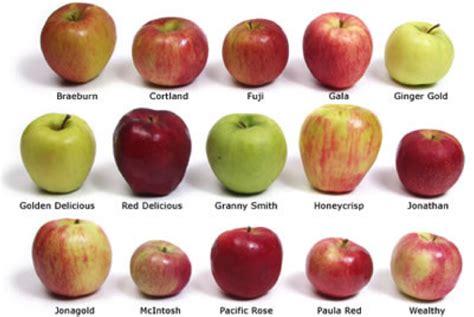 Apple Varieties | top 5 health benefits of apple
