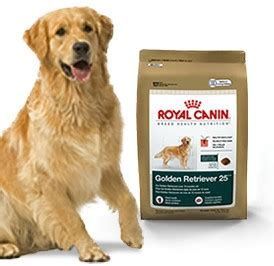golden retriever best food royal canin golden retriever 25 food 5 5 lb bag