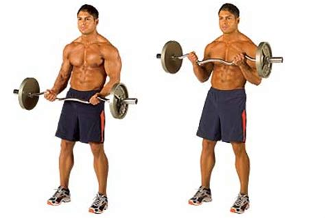 bicep exercise bicep curl and its variations no excuses health