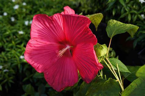 non flowering plants exles darxxidecom